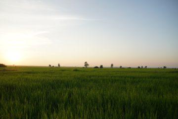 ミャンマーの田園風景の画像